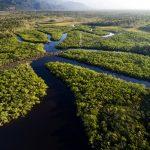 Amazônia: Eu com isso?