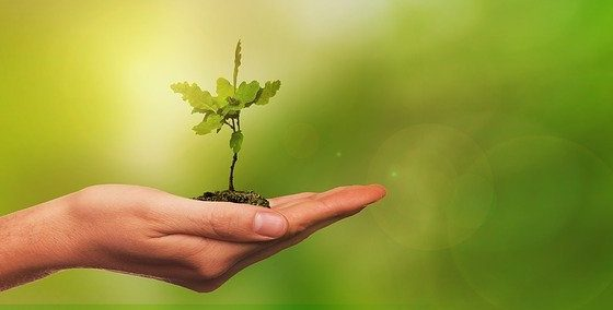 Francisco: ecologia integral, necessária uma profunda conversão interior